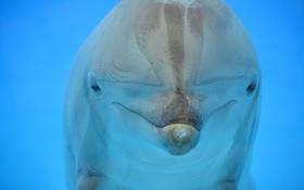 Обои вода, природа, дельфин