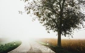 Обои дорога, туман, дерево