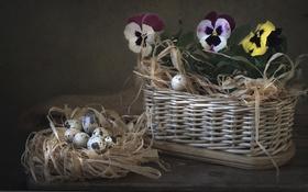 Обои корзина, яйца, виола