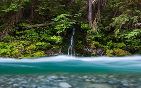 Обои Bacon Creek, Mount Baker-Snoqualmie National Forest, штат Вашингтон, США, водопад, ручей, река