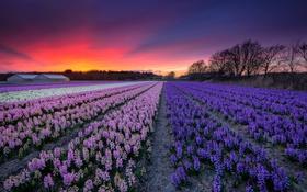 Обои поле, небо, закат, цветы