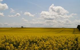 Обои поле, небо, облака, желтое, рапс
