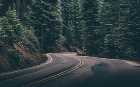 Обои дорога, деревья, трасса