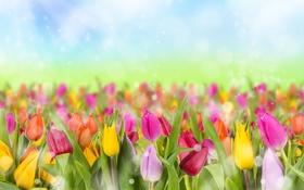 Обои боке, много, блики, разноцветные, солнце, небо, тюльпаны