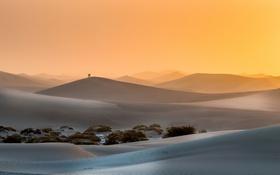 Обои люди, пустыня, утро