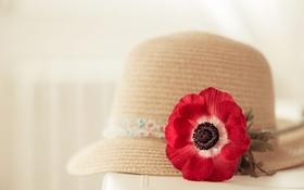 Обои цветок, фон, шляпка