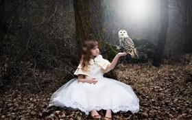 Обои сова, птица, девочка