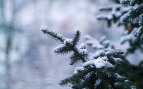 Картинка зима, снег, ветки