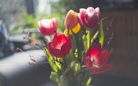Обои цветы, фон, тюльпаны