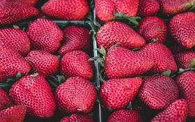 Обои клубника, ягода, виктория