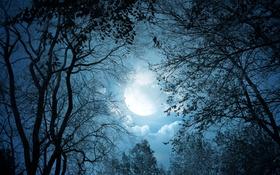 Картинка небо, деревья, ночь, луна