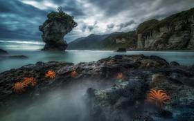 Обои море, скалы, берег, Starfish Colony