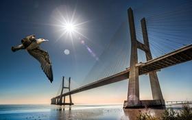 Обои мост, птица, чайка, Португалия, Лиссабон
