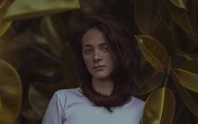 Обои взгляд, листья, девушка, лицо, фон, волосы