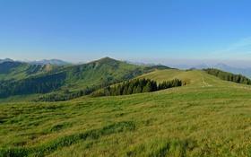 Обои зелень, небо, трава, деревья, горы, голубое, поля