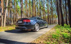 Обои дорога, машина, авто, лес, Audi, Ауди, фотограф