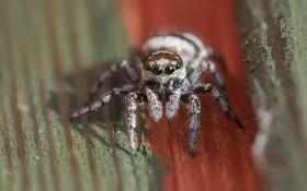 Обои природа, фон, паук