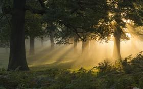 Обои лес, солнце, свет, деревья, папоротник