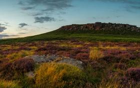Обои трава, камни, вечер, равнина, холм, Великобритания, лаванда
