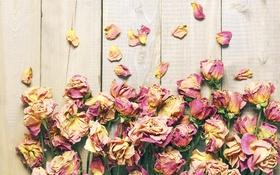 Картинка розы, лепестки, wood, flowers, petals, roses