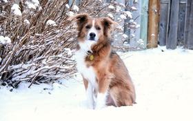 Обои зима, взгляд, снег, друг, собака