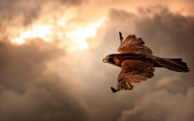 Картинка sky, bird, hawk