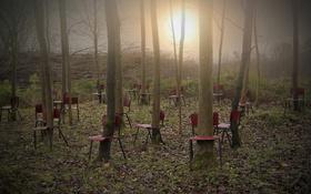 Картинка свет, деревья, стулья