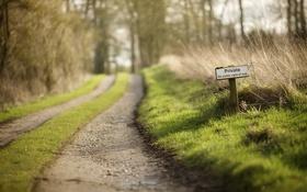 Обои дорога, трава, природа, Private