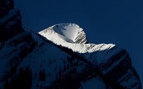 Обои снег, деревья, горы, тень, склон, вершина