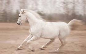 Обои природа, конь, бег