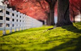 Обои забор, дерево, трава