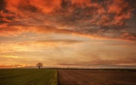 Обои поле, дерево, утро