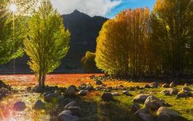 Обои поле, небо, деревья, природа, камни