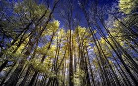 Обои лес, небо, деревья