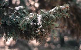 Обои зима, снег, иголки, ветки, елка