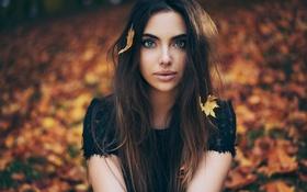 Картинка листья, девушка, брюнетка