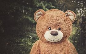 Обои медведь, игрушка, улыбка
