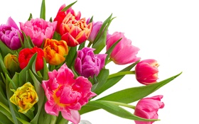 Обои colorful, тюльпаны, flowers, tulips, bouquet