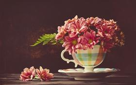Обои чашка, фон, хризантемы