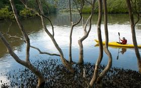 Обои вода, деревья, Австралия, каноэ, Новый Южный Уэльс, Marramarra Creek