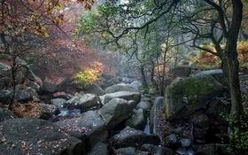 Обои осень, лес, листья, деревья, ручей, камни, мох