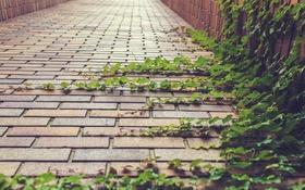 Обои листья, улица, растение, зеленые, плющ