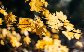 Обои листья, ветки, желтые