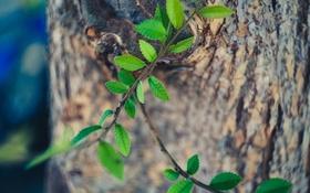 Картинка листья, дерево, ветка