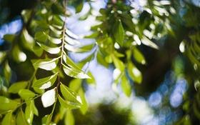 Обои листья, ветки, дерево