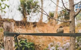 Обои дерево, птица, перья, воробей