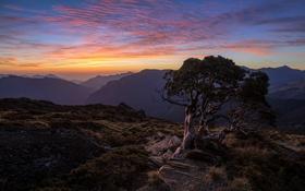 Картинка горы, дерево, утро