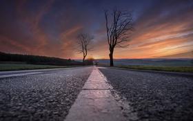 Обои дорога, деревья, закат