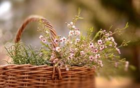 Обои цветы, природа, корзина