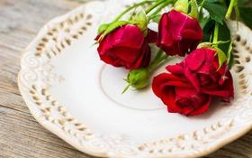 Обои цветы, розы, блюдо